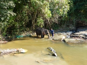 L'éléphant va se laver...